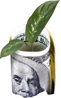dollar bill rolled-up with plant inside